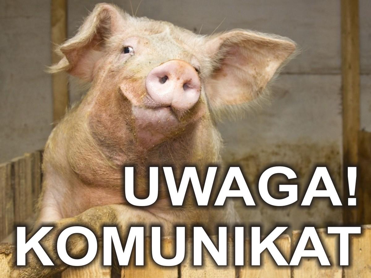 Komunikat: Afrykański pomór świń
