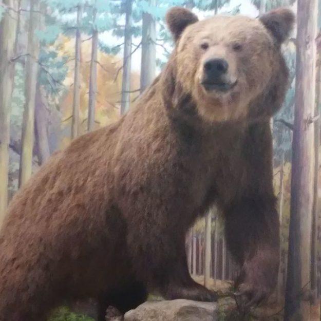 2017-11-08: Wycieczka do Muzeum Przyrodniczego w Ciężkowicach