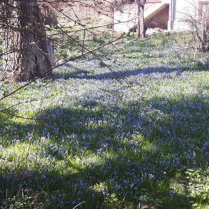 2018-04-09: Wiosna w ogrodzie