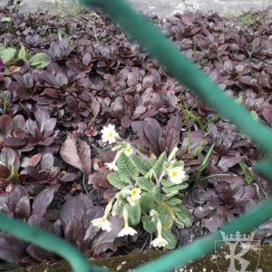 2019-03-21: Wiosenny korowód