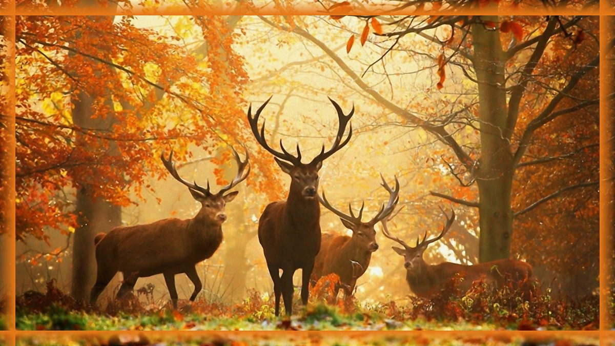 Harmonogram pracy leśniczego