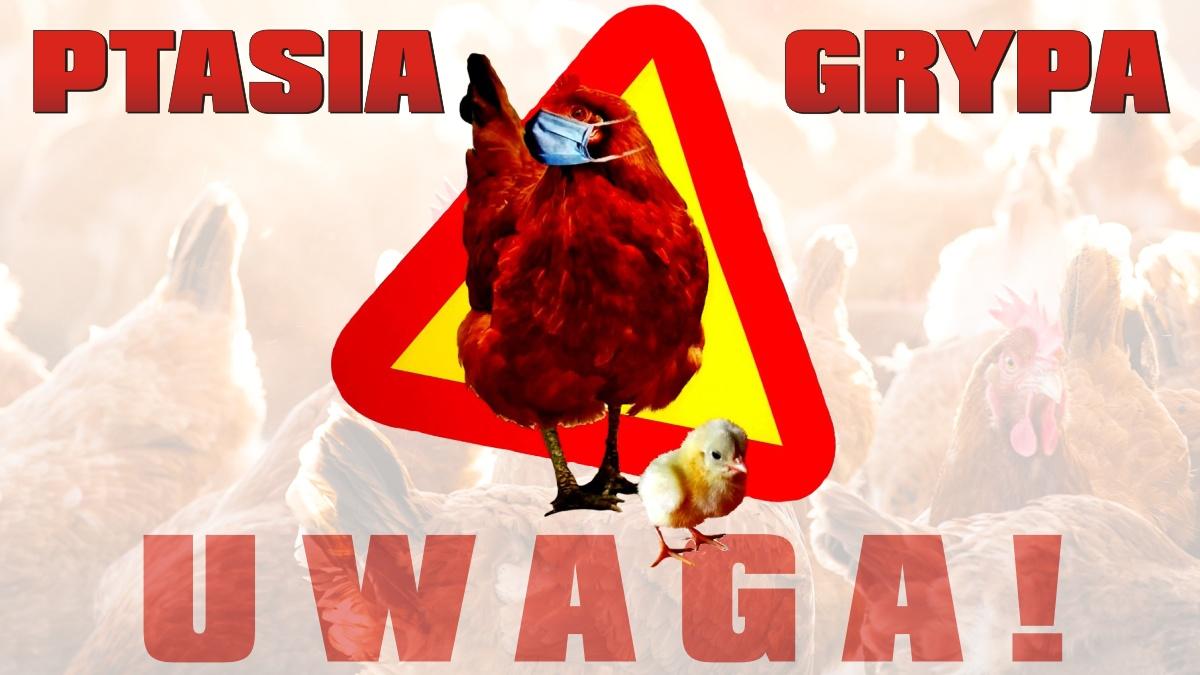 UWAGA! Wirus ptasiej grypy