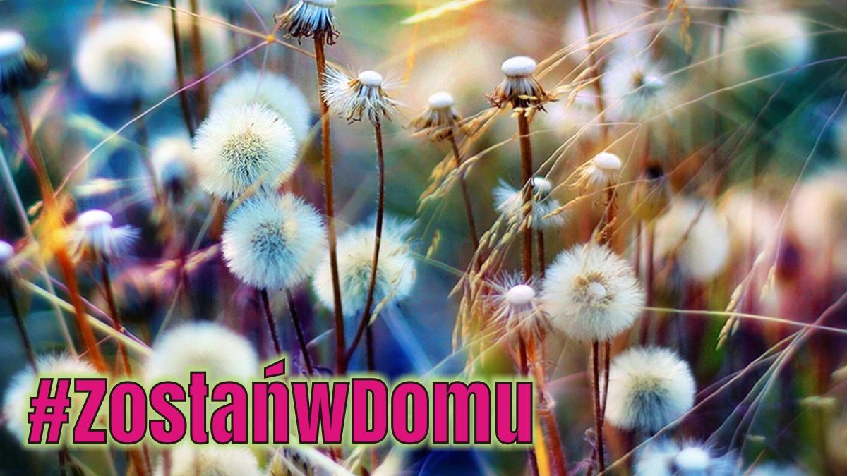 #ZostańwDomu: Naśladujemy Panią Wiosnę